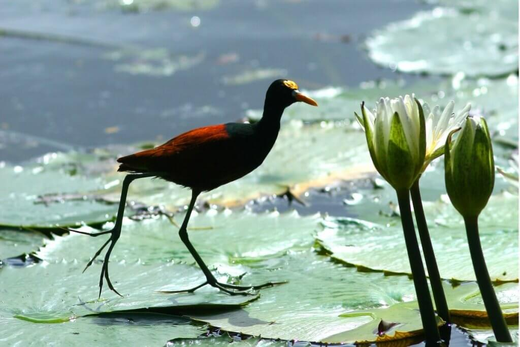 bird-on-lily-pad