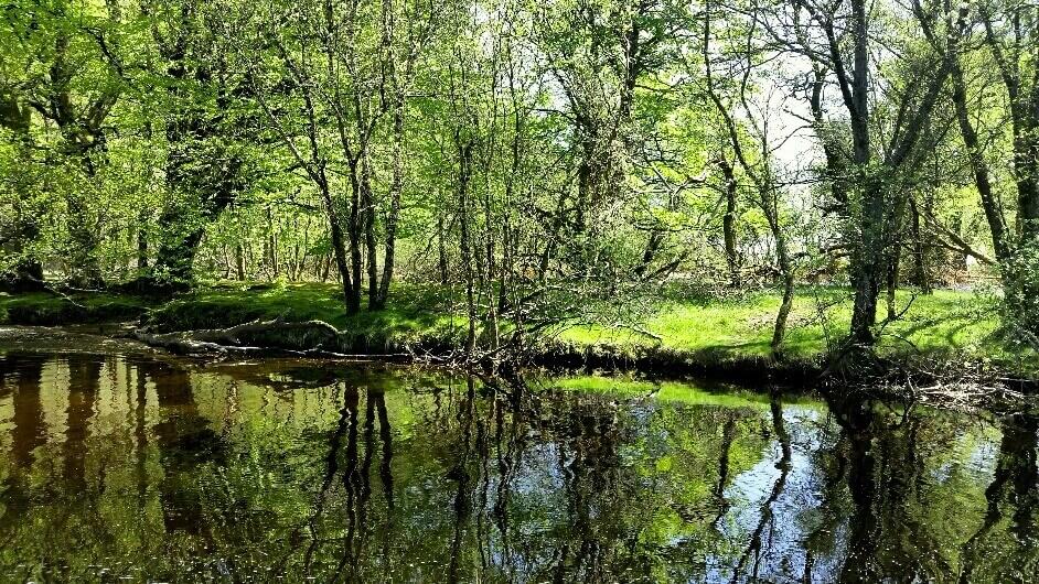 Creekside